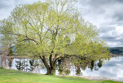 Photograph - Spring Tree - Pinhey's Point. Ontario by Rob Huntley