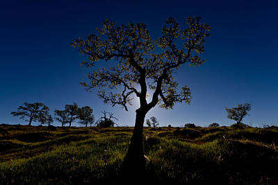 Photograph - Spring Tree by Robert Woodward