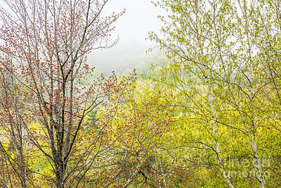 Photograph - Spring Trees In Acadia by Susan Cole Kelly