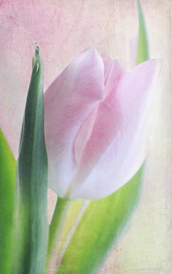Interior Decoration Mixed Media - Spring Tulip by Heike Hultsch