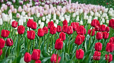 Photograph - Spring Tulip Landscape Art Prints by Valerie Garner