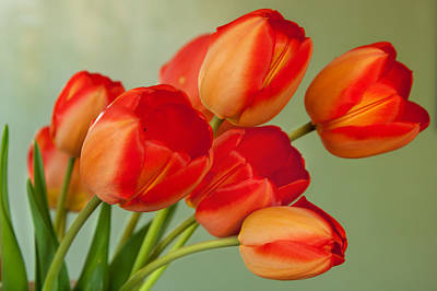 Photograph - Spring Tulips by Courtney Webster