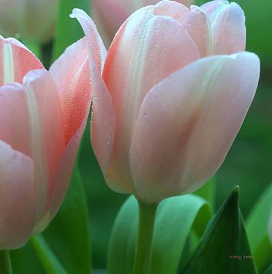 Namaste With Pixels - Spring Tulips by Kathy Yates