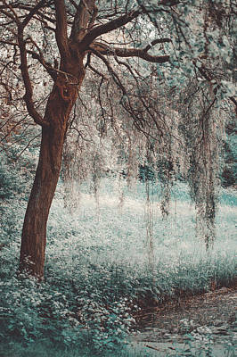 Photograph - Spring Turned To Winter. Nature In Alien Skin by Jenny Rainbow
