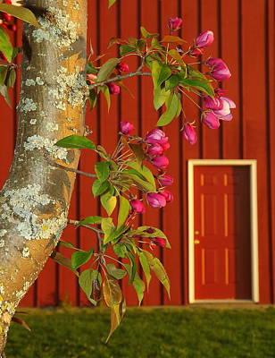 Photograph - Spring by Viviana  Nadowski