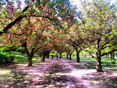 Cherry Blossoms Road Photograph - Spring Walkway Lined By Blooming Cherry Trees by Nishanth Gopinathan
