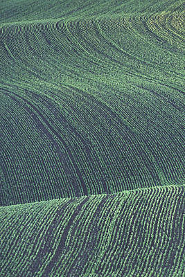 Photograph - Spring Wheat Rows by Doug Davidson