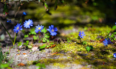 Photograph - Spring Wild Flowers by Jenny Rainbow