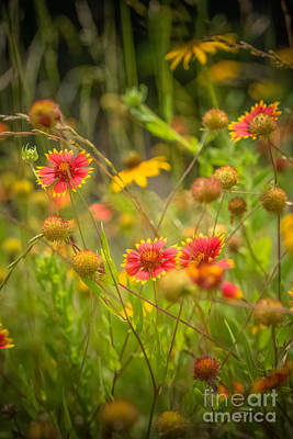 Photograph - Spring Wild by Kim Henderson