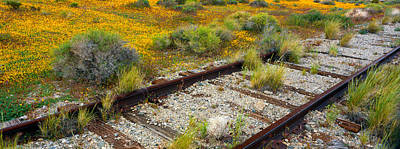 Spring Wildflowers And Railroad Tracks Print by Panoramic Images