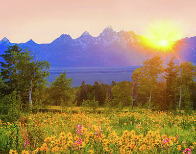 Photograph - Spring Wildflowers In Grand Teton by Ron thomas