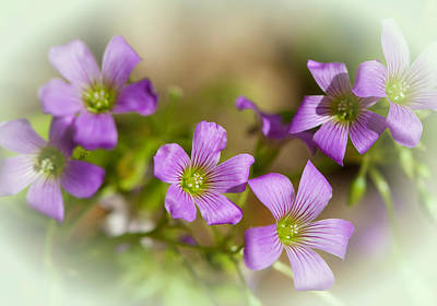 Photograph - Spring Wildflowers by Stephen Anderson