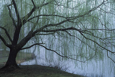 Photograph - Spring Willow by Jim Dollar