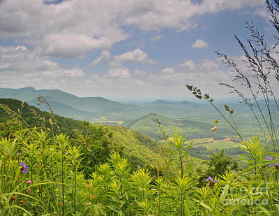 Photograph - Spring Wisp And Flowers On The Blue Ridge Parkway by Nature Scapes Fine Art