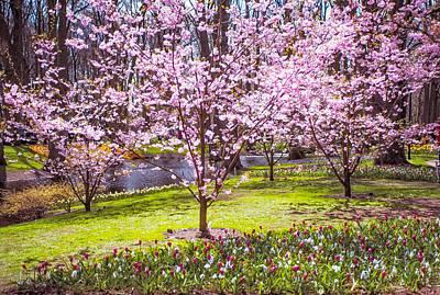Dreamy Pink Park Scene Photograph - Spring Wonderland. Garden Keukenhof. Netherlands by Jenny Rainbow