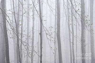 Photograph - Spring Woodland Fog 1 by Alan L Graham
