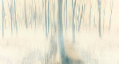 Woodland Walk Photograph - Spring Woods by Janet Burdon