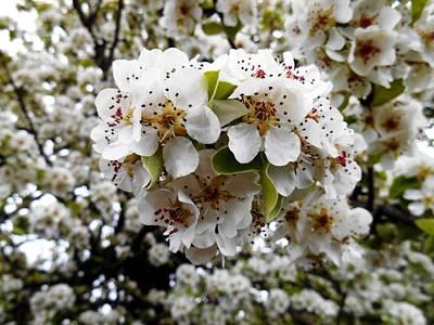 Photograph - Spring by Yuriy Vekshinskiy