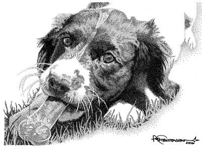Puppy Drawing - Springer Puppy by Rob Christensen