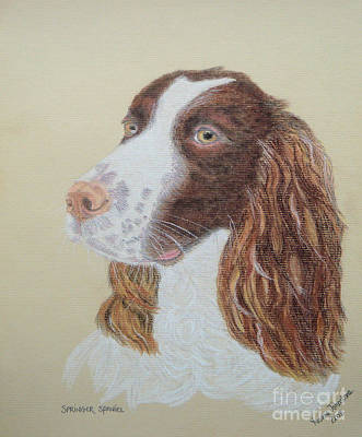 Painting - Springer Spaniel by Yvonne Johnstone