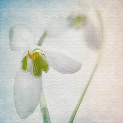 Photograph - Springflower by Annie Snel