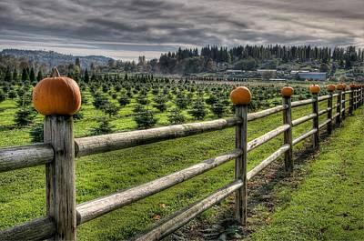 Photograph - Springhetti Road Pumpkins by Spencer McDonald
