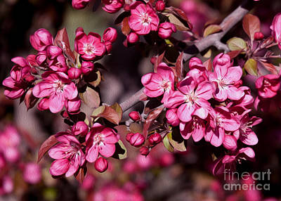 Art Print featuring the photograph Spring's Arrival by Roselynne Broussard