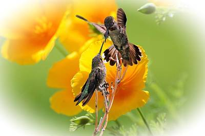 Hummingbirds Photograph - Spring's Beauty by Lynn Bauer