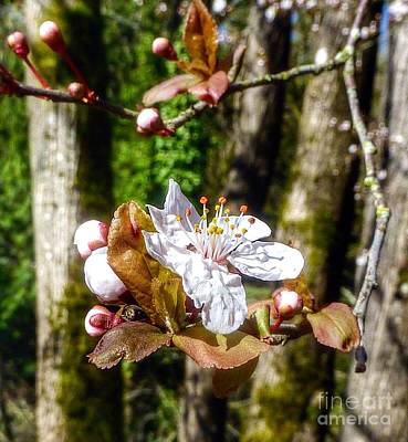 Photograph - Springs Coming  by Susan Garren