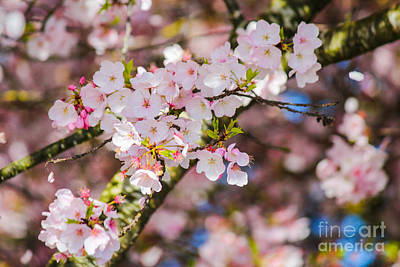 Photograph - Spring's First Blush by Patricia Babbitt