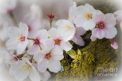 Photograph - Spring's Herald by Patricia Babbitt