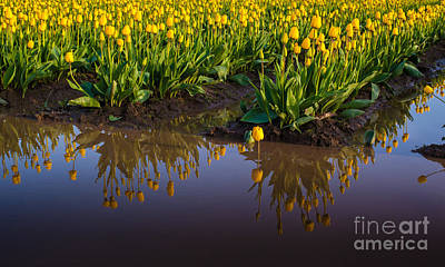 Spring Photograph - Springs Reflection by Mike Reid