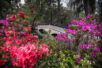 Photograph - Springtime At Magnolia Plantation 13 by Walt  Baker