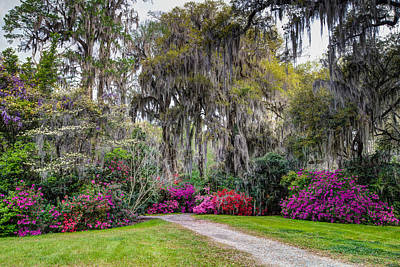 Photograph - Springtime At Magnolia Plantation 16 by Walt  Baker