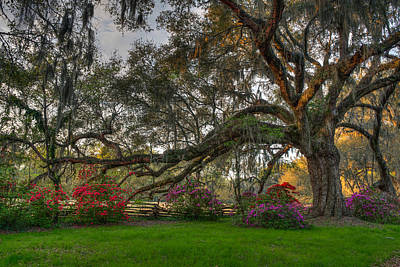 Photograph - Springtime At Magnolia Plantation 18 by Walt  Baker