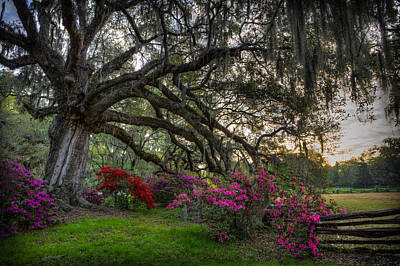 Photograph - Springtime At Magnolia Plantation 20 by Walt  Baker