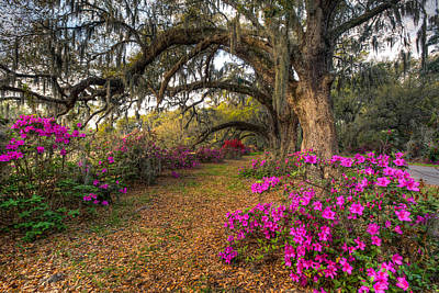 Photograph - Springtime At Magnolia Plantation 21 by Walt  Baker