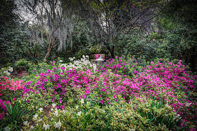 Photograph - Springtime At Magnolia Plantation 22 by Walt  Baker