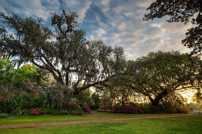 Photograph - Springtime At Magnolia Plantation 9 by Walt  Baker
