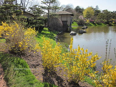 Springtime At The Japanese Gardens Art Print by Kathie Chicoine