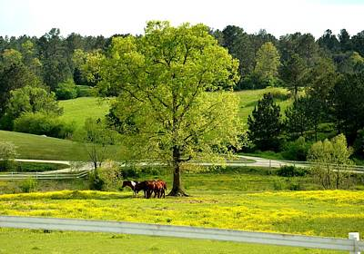 Photograph - Springtime At The Ranch 2013 by Maria Urso