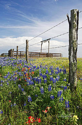 Photograph - Springtime At The Ranch by Cheri Randolph