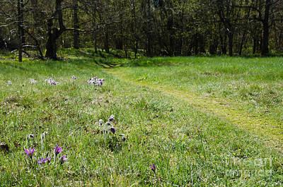 Photograph - Springtime Beauty by Kennerth and Birgitta Kullman