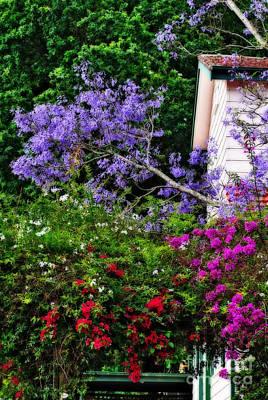 Floral Scene Garden Photograph - Springtime Beauty - Urban Scene by Kaye Menner