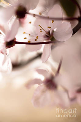 Photograph - Springtime Blossom by Jan Bickerton