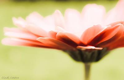 Photograph - Springtime by Cindi Castro