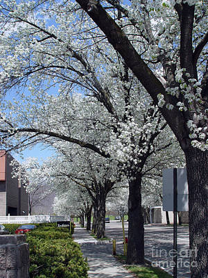 Art Print featuring the photograph Springtime Corning Ny 2 by Tom Doud