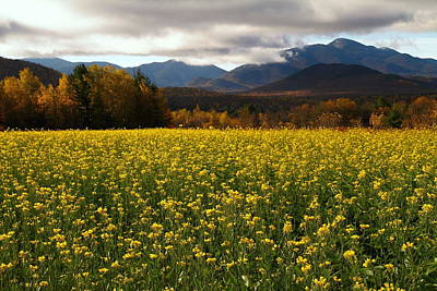 Autumn Photograph - Springtime During Autumn In The Adirondacks by Jetson Nguyen