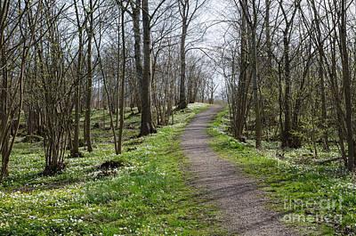 Photograph - Springtime Forest View by Kennerth and Birgitta Kullman