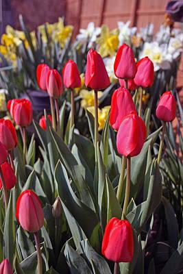 Photograph - Springtime Garden by Kay Novy